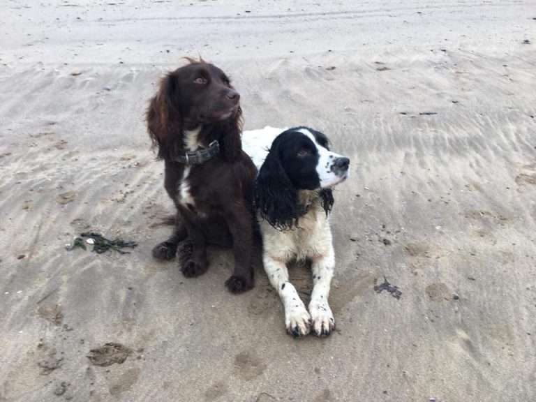 Two dogs stolen from Devon found at the other end of the country