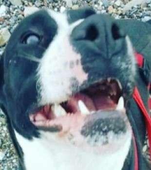 Dog thieves strike in Cumbria