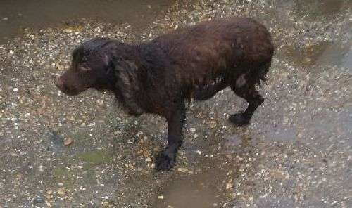 Stolen dog reunited with Aldermaston owners but sister is still missing