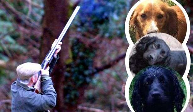 Shoot puts up £5,000 reward for safe return of stolen dogs