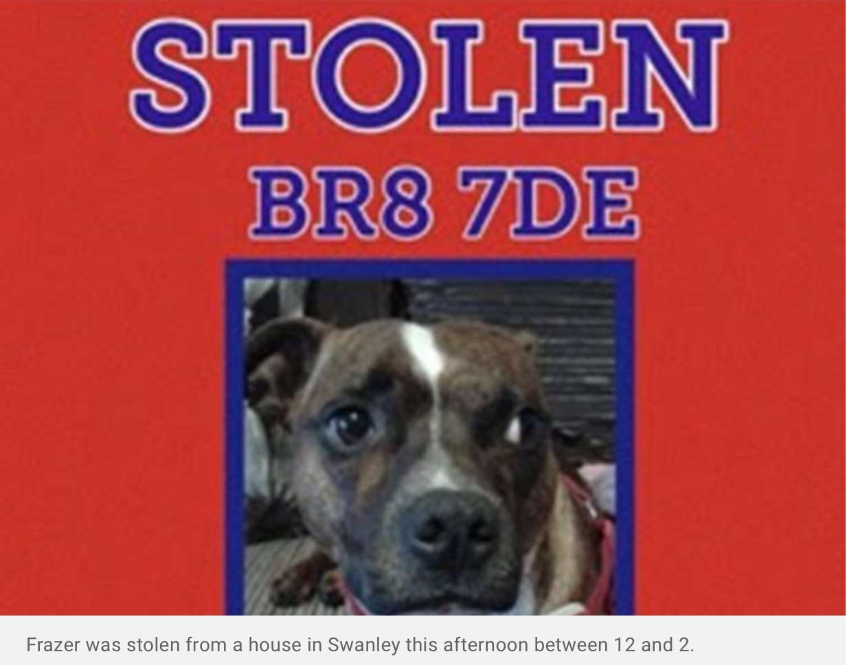 Swanley staffie missing after a house was broken into now reunited
