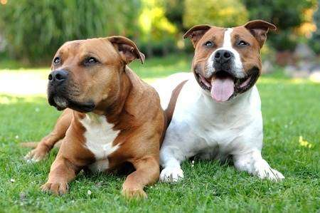 Number of dogs stolen in Staffordshire hits highest level in five years!