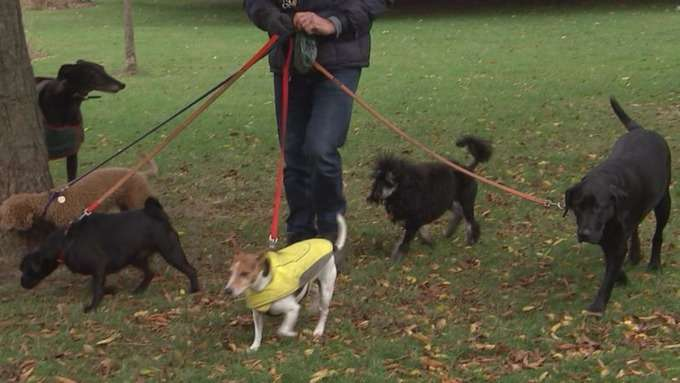 Pet thefts on the rise in London as owners warned of dangers
