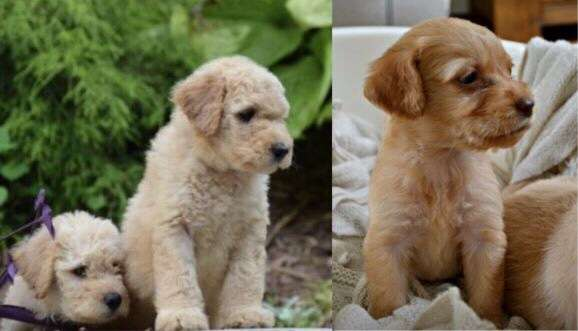Can you help us find four puppies stolen during in a Doncaster burglary?