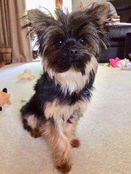 Watch BBC's Victoria Derbyshire's Dog Theft feature
