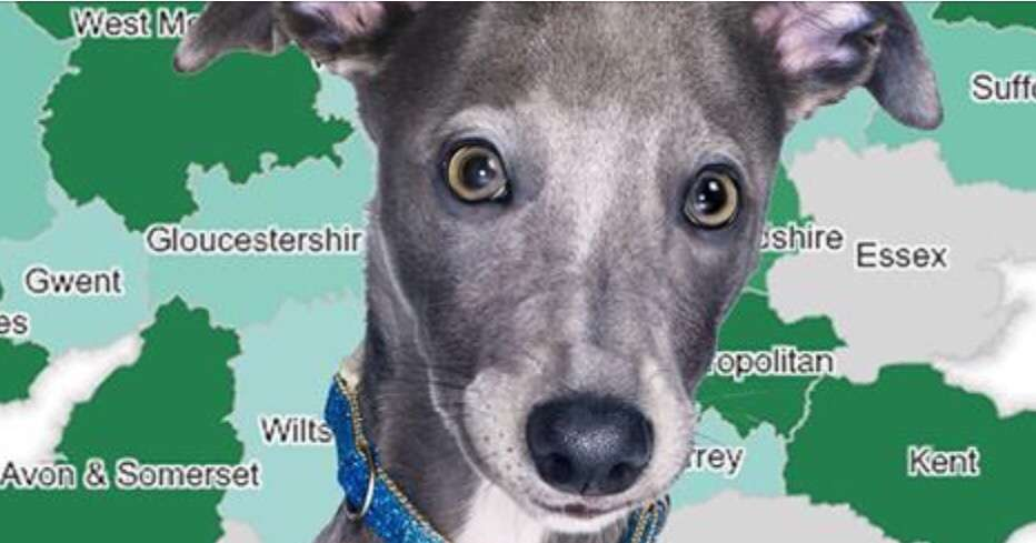 Where are Britain's dognapping hotspots? Canine crime crisis exposed in our interactive map. Mirror Online