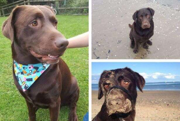 The families that can't move on after losing their dogs to thieves