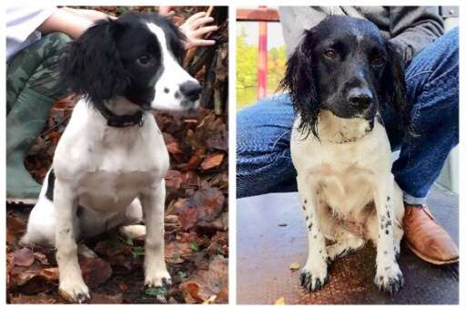 Skelmersdale Police appeal for two stolen dogs