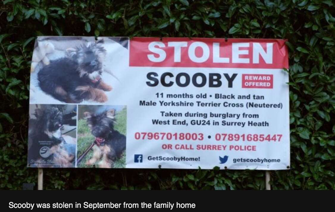 The dogs stolen from their owners' homes