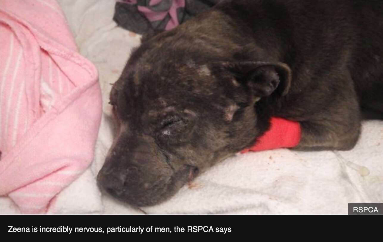 Missing dog found after four years with serious injuries