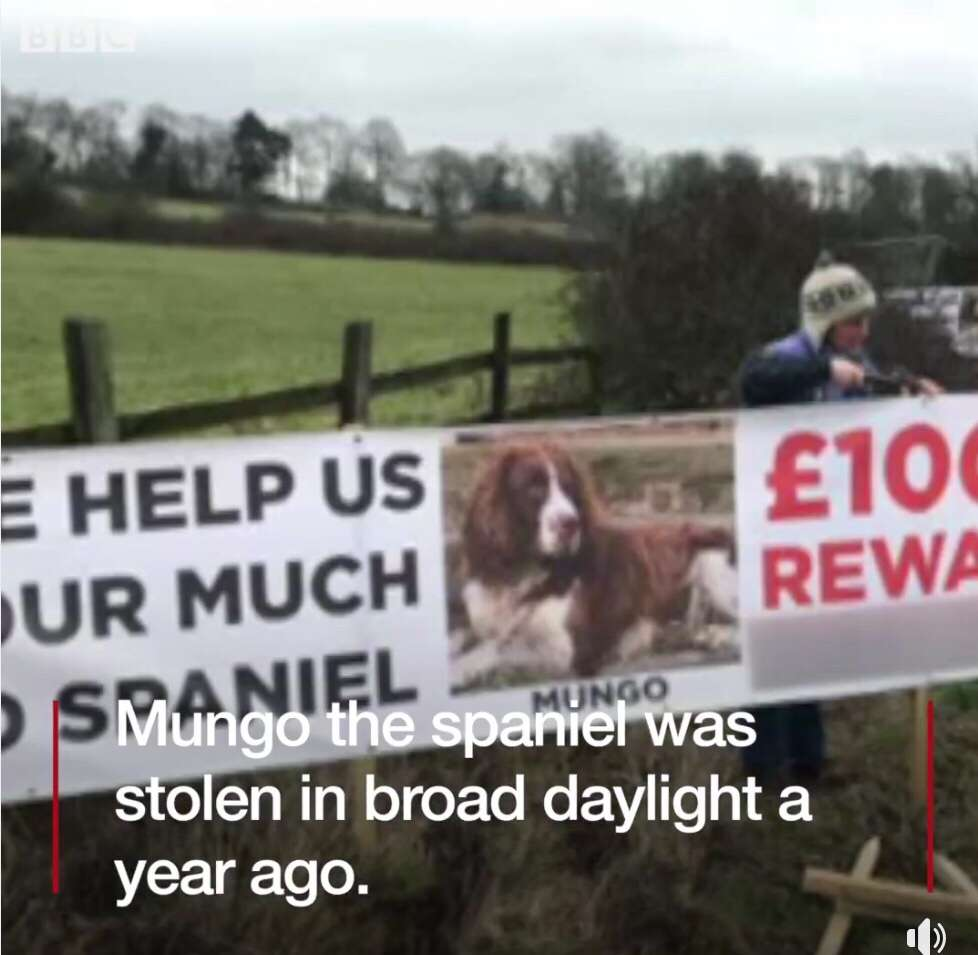 The number of dogs being stolen in Kent is increasing according to a charity that reunites lost dogs with their owners.