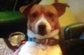 Dog is 'stolen' from outside Talbot Road shop in Blackpool