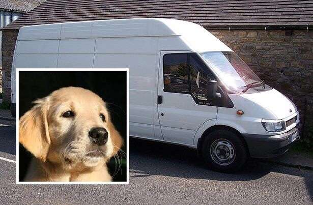 Concern over 'white van with three hooded men scoping out high value dog breeds'