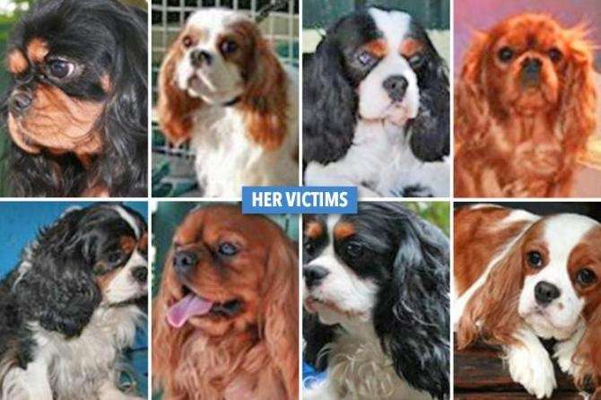 REAL CRUELLA DE VIL Dog-snatcher who looks just like Disney villain Cruella de Vil stole 15 pooches and only receives a suspended sentence! #PetTheftReform