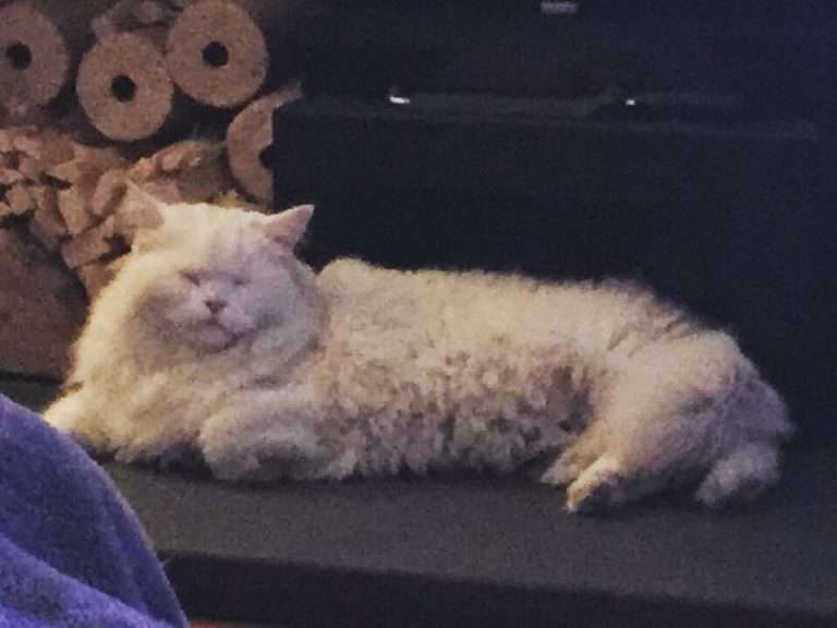This is how the pet microchip system doesn't work to help reunite missing pets.  Snowy is the latest victim and finder would not return him home but once the police get involved he is now back home! #PetTheftReform