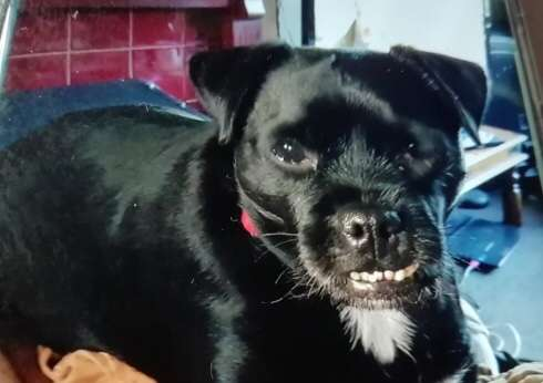 Acle dog stolen after owner pushed to ground | Great Yarmouth News – Great Yarmouth Mercury