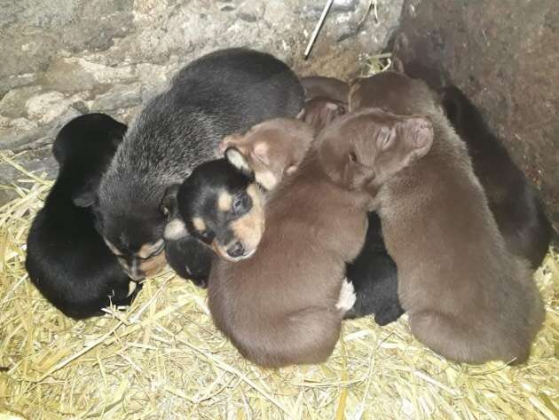 An urgent appeal has gone out after a litter of 10 tiny puppies were stolen from a Croyde farm today (Wednesday, February 20).