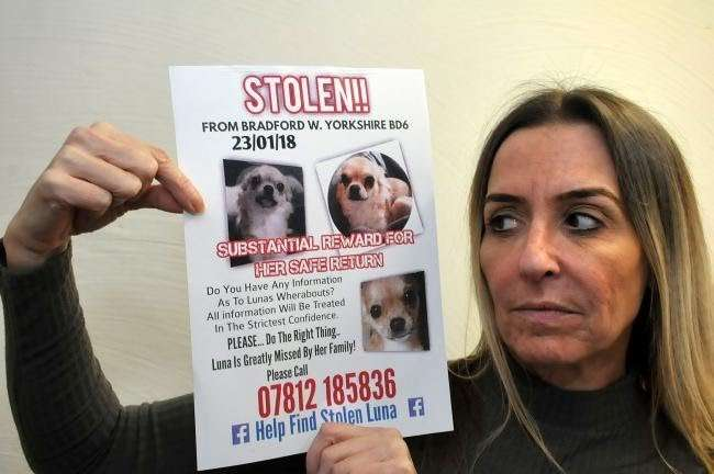 Majority of stolen dogs are never recovered #PetTheftReform