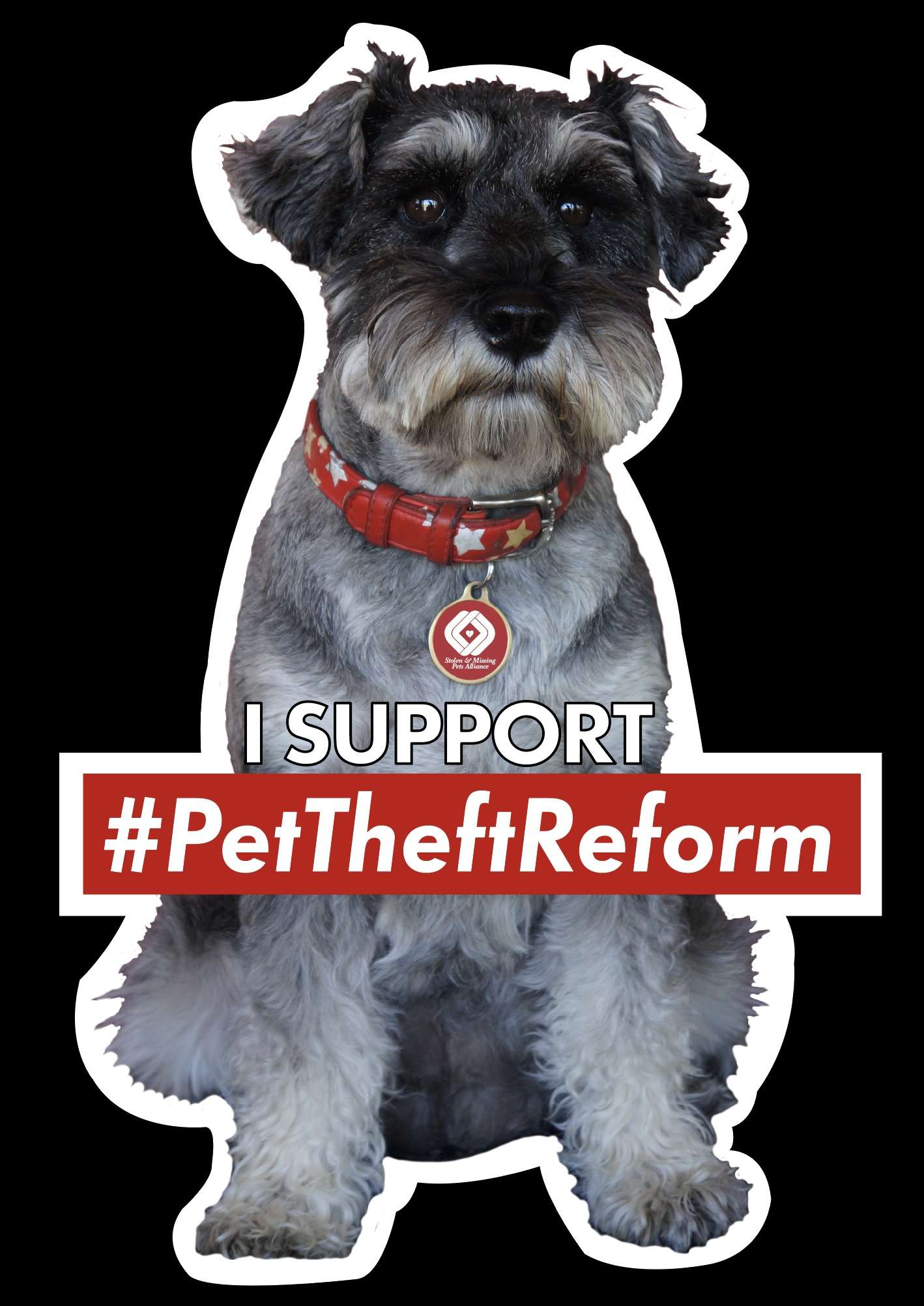 Time for some MYTH BUSTING! #PetTheftReform
