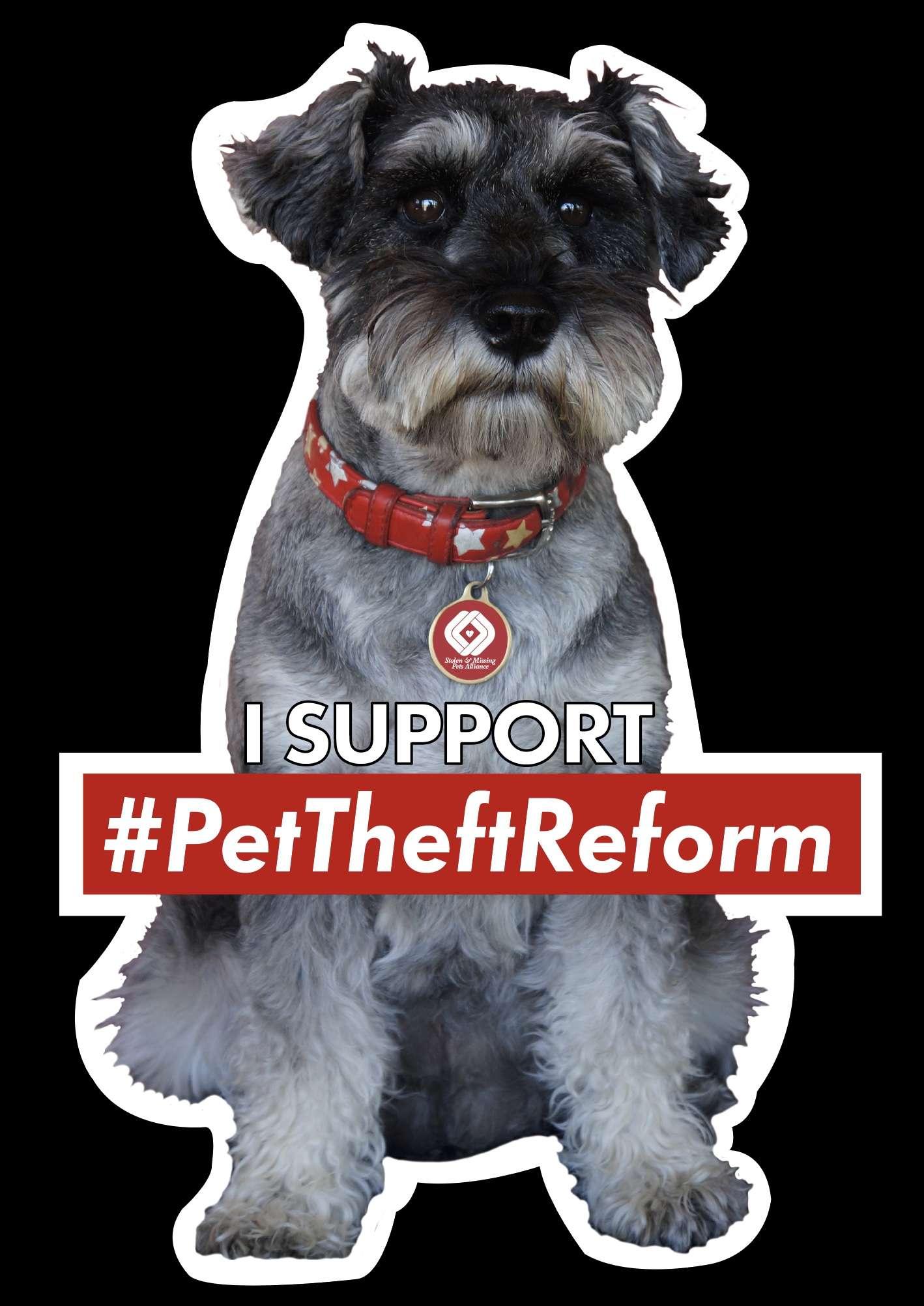 Time for some MYTH BUSTING! #PetTheftReform