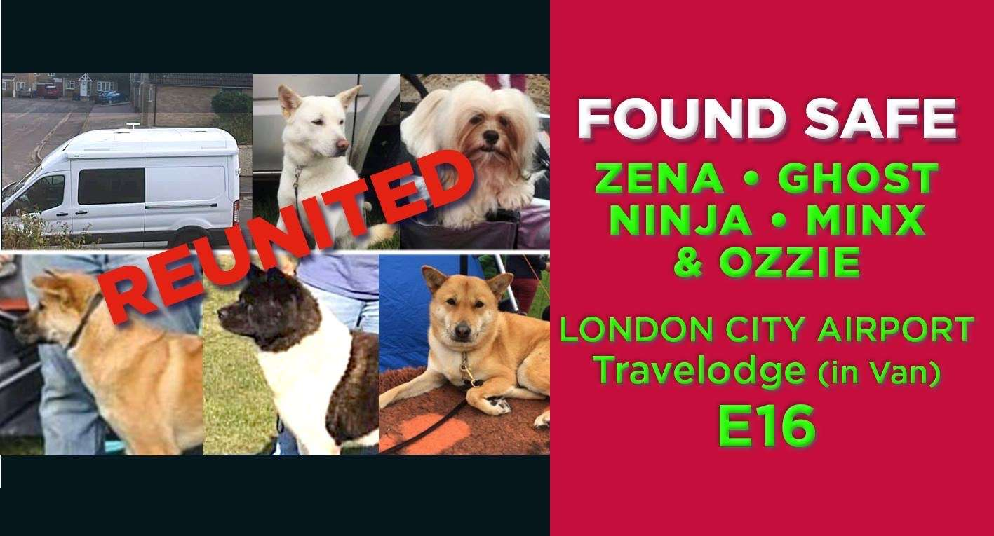 5 Dogs stolen in a van from Travel Lodge car park at London City Airport now reunited #PetTheftReform