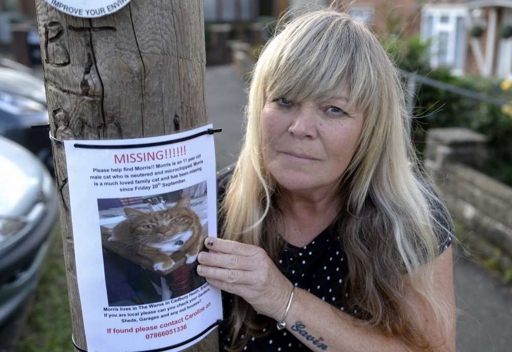 Family sent video of their missing cat with its head cut off – Bristol Live