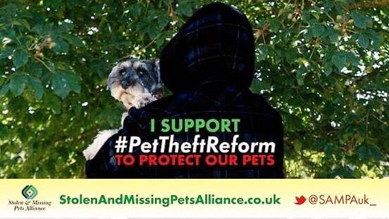 The Theft Act continues to work in the pet thieves favour as RT HON Robert Buckland replies to the Petitions Committee #PetTheftReform