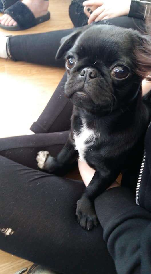 Pug puppy stolen, please share, we just want her home.