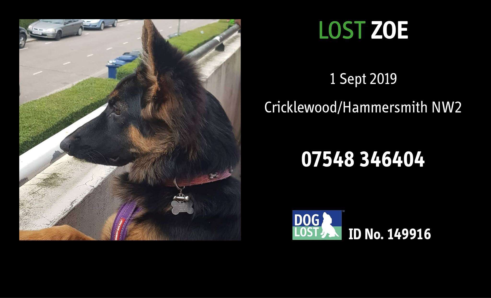REUNITED !   ZOE: My stolen dog's microchip was scanned on the 1st November and I can't find out where she is!