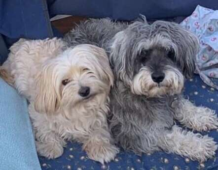 TWO DOGS WHO WERE BEING LOOKED AFTER HAVE DISAPPEARED!