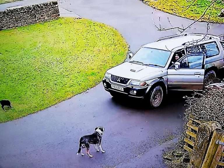 CCTV images of Collie puppy being snatched