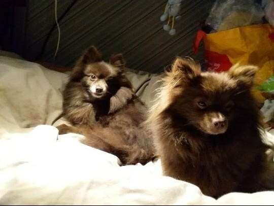 Two dogs stolen from secure car park outside Sainsbury's in Luton.