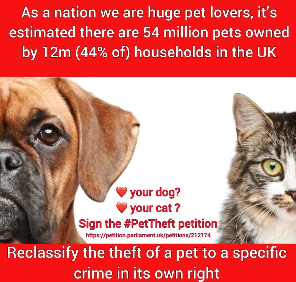 Cat thefts risen by 40%, Dog Thefts risen by 24%. It might not happen to you but it's going to happen to someone today! Please sign the #PetTheftPetition