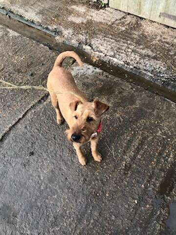 Stolen dog Peggy found in secure walled garden #PetTheftReform