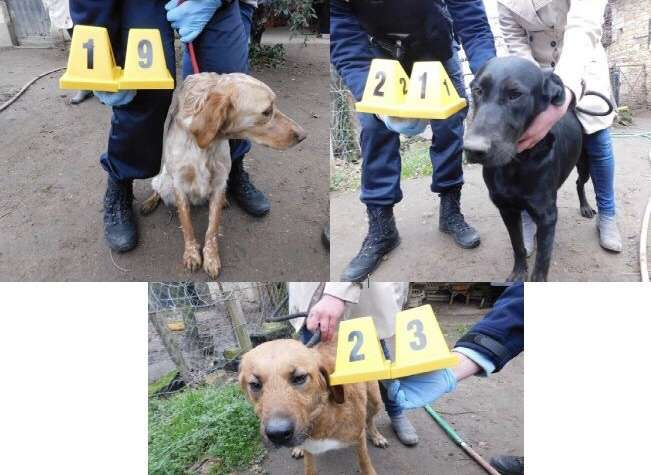 23 STOLEN DOGS HAVE BEEN FOUND IN THOUARS IN FRANCE, do you recognise any as UK missing dogs? #PetTheftReform