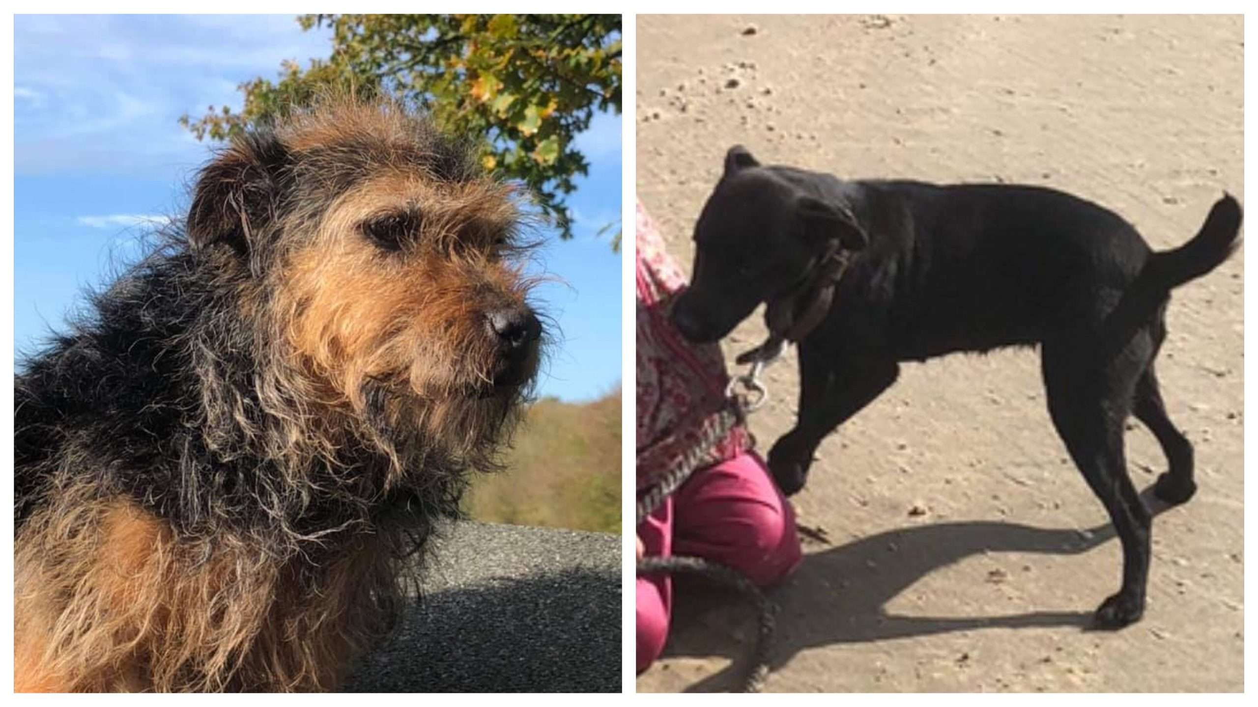 Two dogs stolen overnight from Beckley, Rye, East Sussex. #PetTheftReform