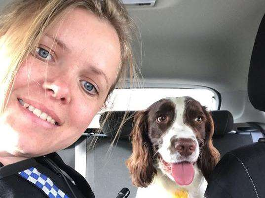 Car with pet Springer Spaniel inside is stolen from village near Milton Keynes #PetTheftReform