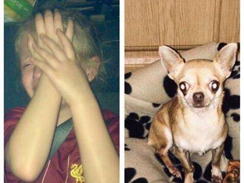 Can you help reunite heartbroken Milton Keynes child with her missing Chihuahua?