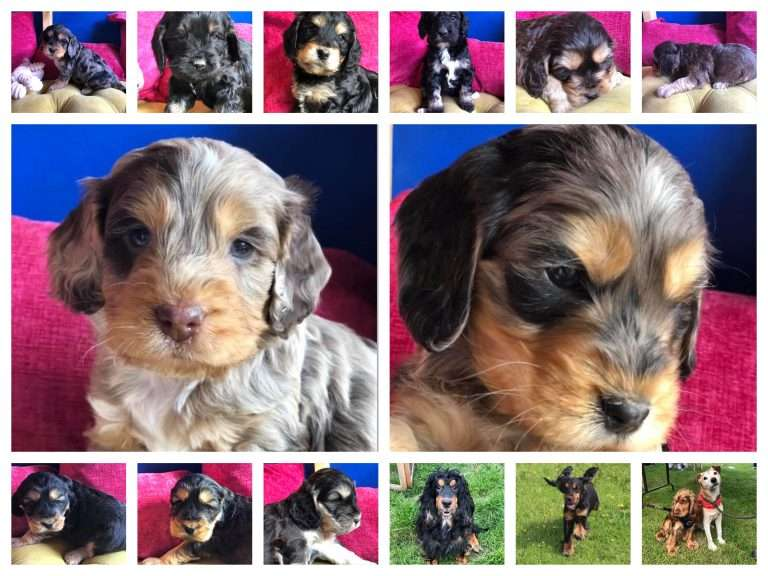 PUPPIES AND MUMS STOLEN FROM TARLETON, LANCASHIRE BUT COULD BE ANYWHERE! #PetTheftReform
