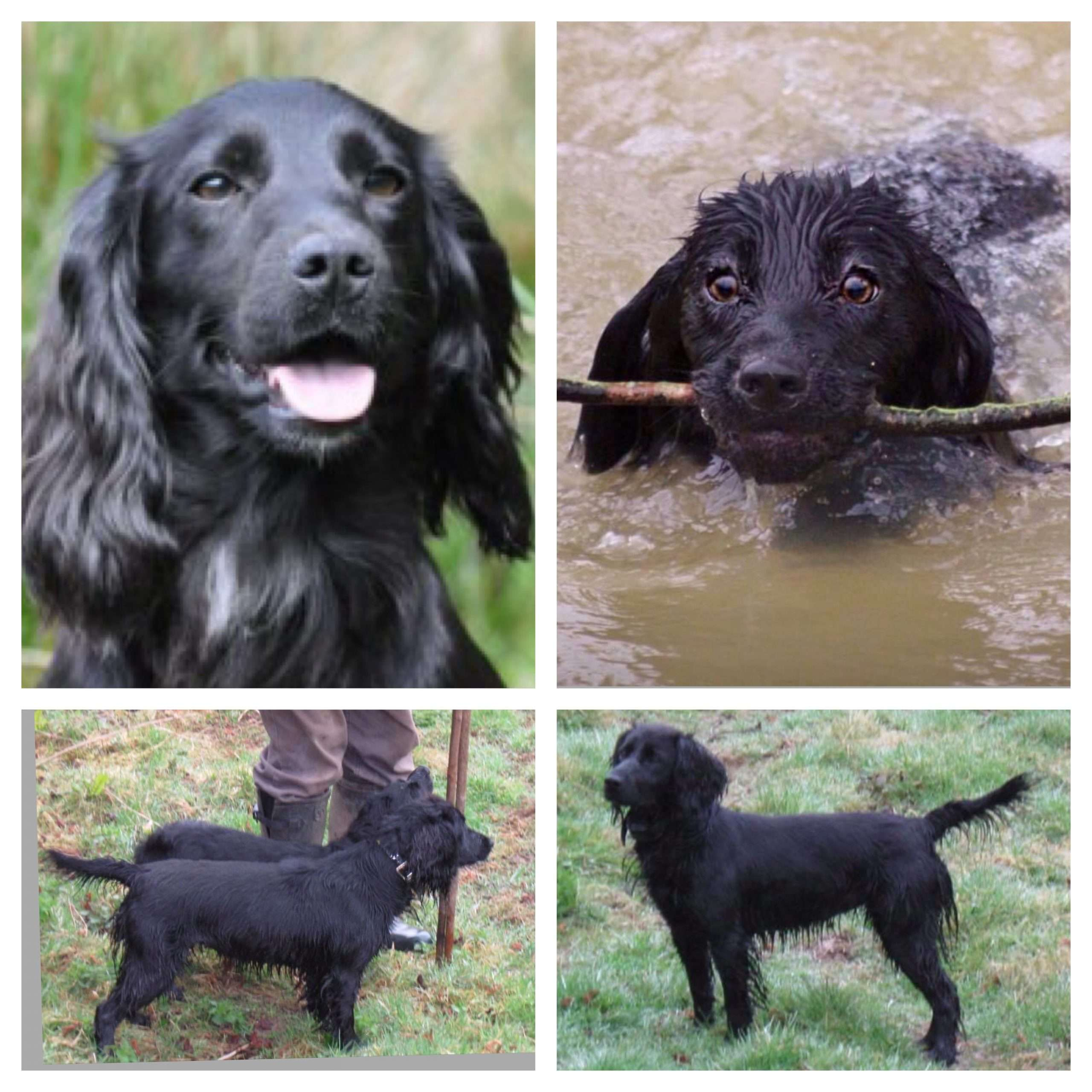 Two dogs stolen from secure kennels in Bodiam, East Sussex #PetTheftReform.