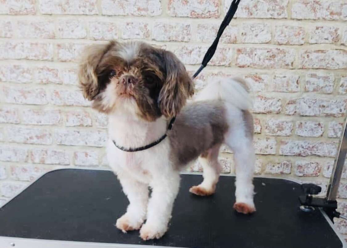Gizmo picked up and taken by men claiming he belonged to their mum. #PetTheftReform