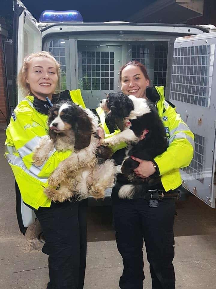 Stolen Cavelier King Charles Spaniels reunited by Tandridge Police #PetTheftReform