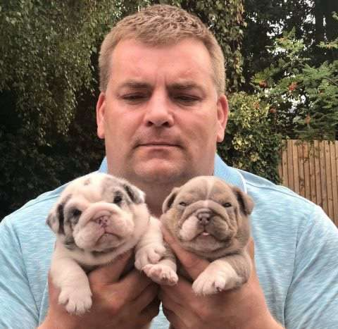 Dad's rant after thieves stole 11 puppies from his children at knifepoint as he offers £50,000 reward