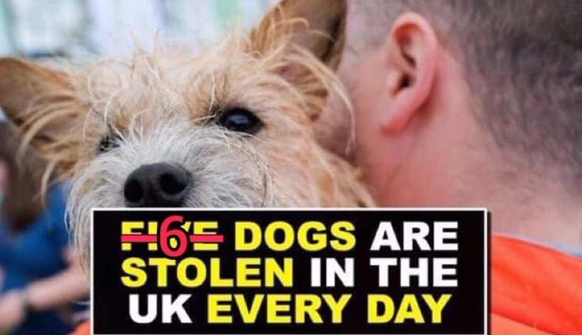 Direct Line Dog Theft Figures for 2018 – 2019 have arrived:- 6 dogs a day are stolen across England and Wales but they say Police figures show a fall in dog thefts? #PetTheftReform