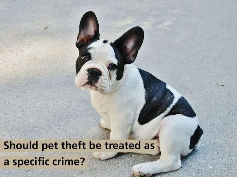 Pet Theft Debate in Parliament today, 19 October, watch live at 4.30 #PetTheftReform