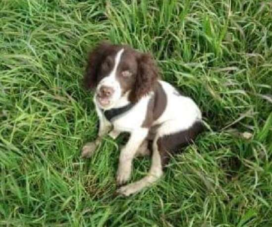 Puppy stolen from car is reunited. #PetTheftReform