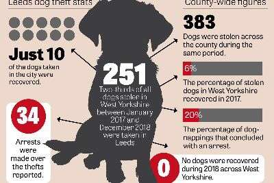 Warning to owners after hundreds of dogs stolen in Leeds – and 96% are never found again, new figures reveal #PetTheftReform