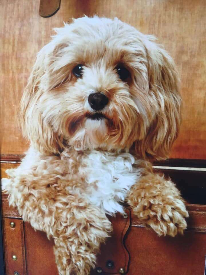 Home burgled and the family dog Primrose has been stolen.