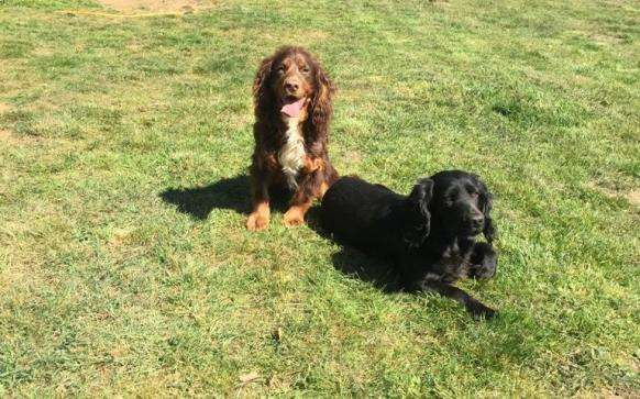Theft of two dogs near Woodbridge #PetTheftReform