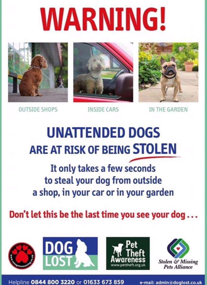 If your dog is lost or stolen! #PetTheftReform